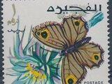 Fujeira 1967 Butterflies