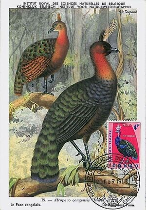 Congo, Democratic Republic of 1963 Protected Birds (1st Group) MCd