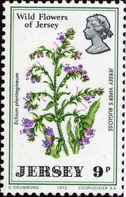 Jersey 1972 Jersey Wild Flowers d