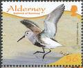 Alderney 2009 Resident Birds Part 4 (Waders) e.jpg