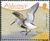 Alderney 2009 Resident Birds Part 4 (Waders) e