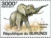 Burundi 2011 Elephants of the African Savanna c