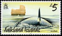 Falkland Islands 2012 Whales & Dolphins l