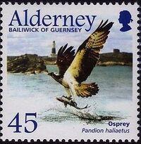 Alderney 2002 Migrating Birds Part 1 Raptors e