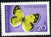 Romania 1969 Butterflies c