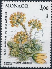 Monaco 1985 Flowers in Mercantour National Park d