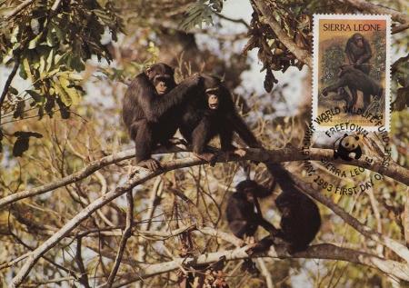 Sierra Leone 1983 WWF - Chimpanzees from Outamba-Kilimi National Park MCb
