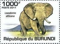 Burundi 2011 Elephants of the African Savanna a
