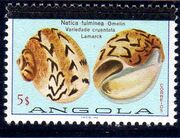 Angola 1981 Sea Shells Overprinted g