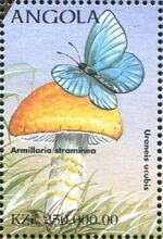 Angola 1998 Butterflies (1st Group) g