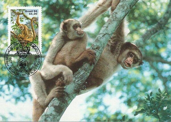 Brazil 1984 WWF - Southern Muriqui MCa