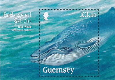 Guernsey 2011 Endangered Species - Blue Whale a