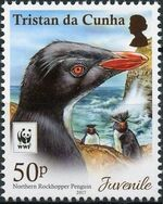 Tristan da Cunha 2017 WWF - Northern Rockhopper Penguin b