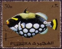 Fujeira 1972 Exotic Fishes c