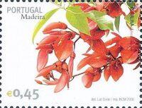 Madeira 2006 Madeira Flowers p