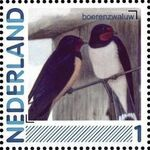 Netherlands 2011 Birds in Netherlands a5