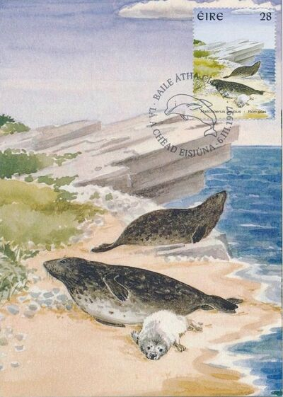 Ireland 1997 Marine Mammals MCa
