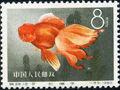 China (People's Republic) 1960 Chinese Goldfish (Carassius auratus auratus) h.jpg