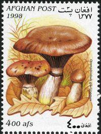 Afghanistan 1998 Mushrooms a