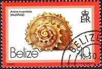 Belize 1980 Shells and Sea Snails q