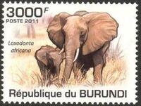 Burundi 2011 Elephants of the African Savanna l