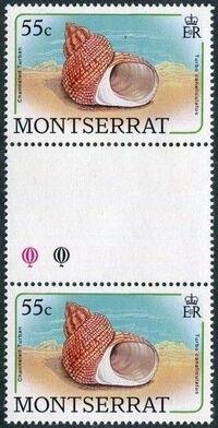 Montserrat 1988 Sea Shells gg