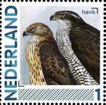 Netherlands 2011 Birds in Netherlands a23