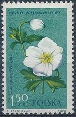 Poland 1962 Protected Flowers i