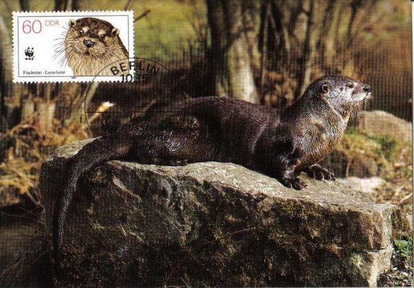 Germany DDR 1987 WWF - European Otter r