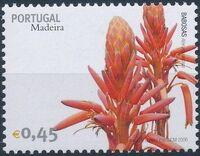 Madeira 2006 Madeira Flowers b