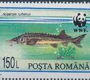 Romania 1994 WWF Sturgeons