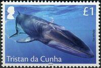 Tristan da Cunha 2019 Marine Mammals c