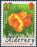 Alderney 2004 Mushrooms b