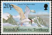 British Antarctic Territory 1998 Birds e