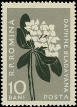 Romania 1957 Carpathian Mountain Flowers b