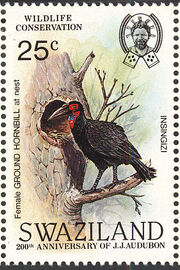 Swaziland 1985 WWF Southern Ground Hornbill (Audubon birth bicentenary) e
