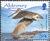 Alderney 2009 Resident Birds Part 4 (Waders) d