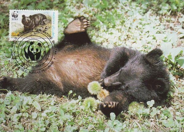 Pakistan 1989 WWF Asiatic Black Bear MCb