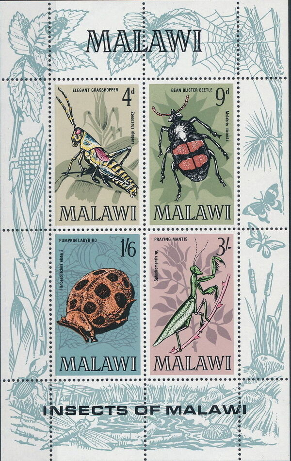 Malawi 1970 Insects of Malawi e