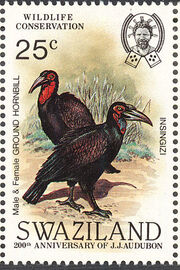 Swaziland 1985 WWF Southern Ground Hornbill (Audubon birth bicentenary) c