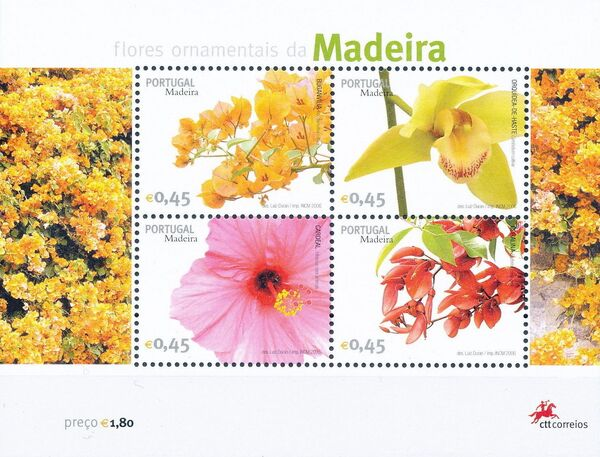 Madeira 2006 Madeira Flowers n