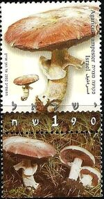 Israel 2002 Mushrooms a