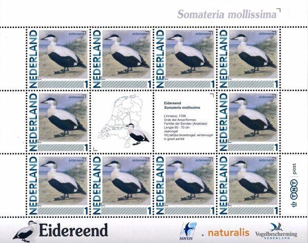 Netherlands 2011 Birds in Netherlands MS9