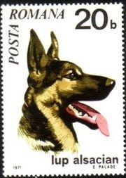 Romania 1971 Dogs a