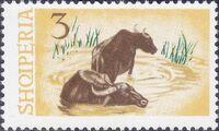 Albania 1965 Water Buffalo c