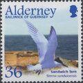 Alderney 2003 Migrating Birds Part 2 Seabirds c.jpg