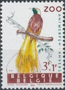 Belgium 1962 Birds of Antwerp Zoo e