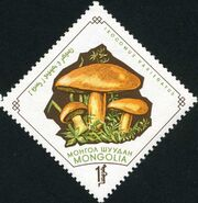 Mongolia 1964 Mushrooms h
