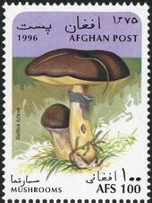 Afghanistan 1996 Mushrooms a