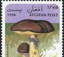 Afghanistan 1996 Mushrooms